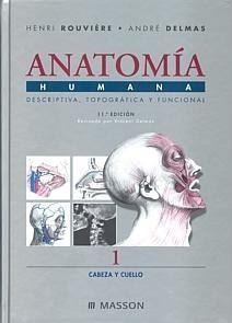 Anatomía humana Rouviere pdf free download 3