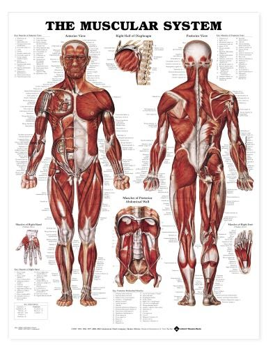 musculo skeltal system examination videos free download 2