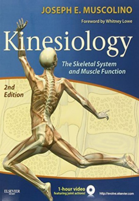 PDF Download Kinesiology The Skeletal System and Muscle Function 2nd Edition Free