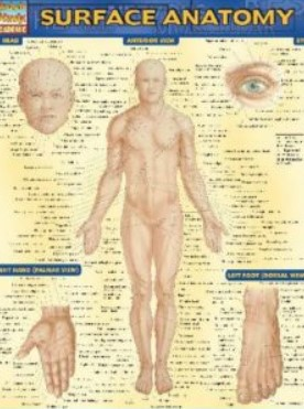 PDF Download BarCharts QuickStudy Surface Anatomy Free