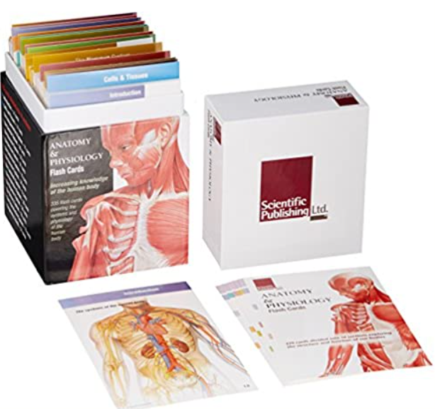 Anatomy & Physiology Flash Cards 1st Edition PDF Free Download