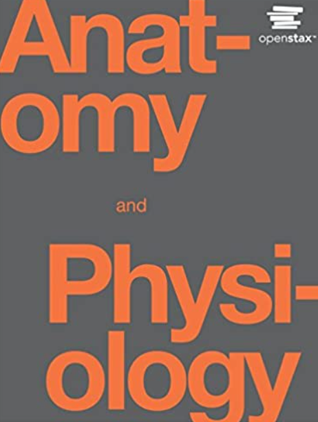 Anatomy and Physiology 1st Edition PDF Free Download